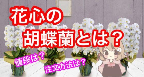 吉祥寺の花屋「花心」のこだわりの胡蝶蘭を値段や用途別に解説します!